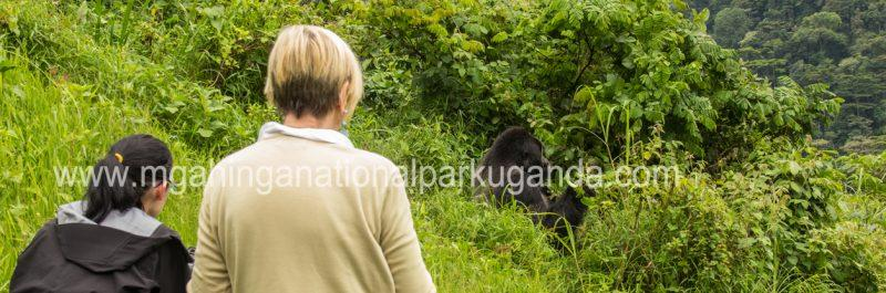 gorilla-tracking-in-mgahinga